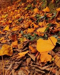 秋天还会远吗。
